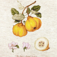 "Cross-Stitch Kit ""The Pear shaped Quince""  Luca-S (BL22430)"